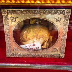 Relokwia czaszki w metalowej gablotce ustawionej na bordowym suknie