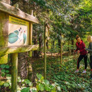Dwie kobiety w sportowych strojach z kijakmi do nordic walking stoją w lesie. na pierwszym planie tablica edukacyjna w drewnianej ramie