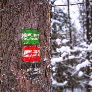 Znaki szlaku nordic walking koloru zielonego i czerwonego wymalowane na pniu drzewa