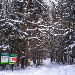 Droga leśna przykryta świeżym śniegiem